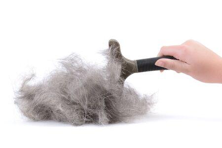 pile of dog fur after brushing isolated white background Zdjęcie Seryjne