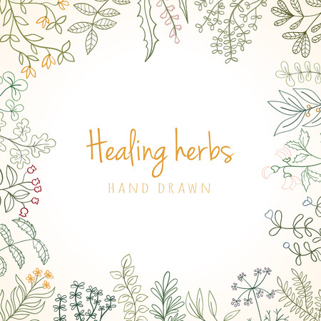 herbal background: Hand drawn vintage background of medicinal organic healing herbs. Vector medical plants and herbal botanical flowerelements can be used for banner template, card, flyer, banner, sale, website