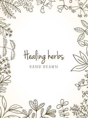 Hand drawn vintage background of medicinal organic healing herbs. Vector medical plants and herbal botanical flowerelements can be used for banner template, card, flyer, banner, sale, website Vector Illustration
