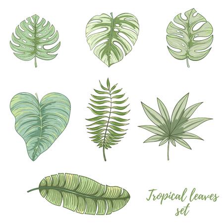 手描きの熱帯のヤシの葉セット。