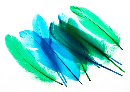 Multi-colored feathers isolated on a white background. Trendy colors.