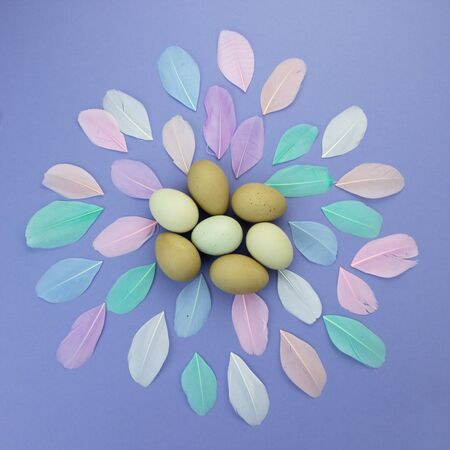 Easter background. Easter egg composition of olive eggs and pastel color feathers on violet background