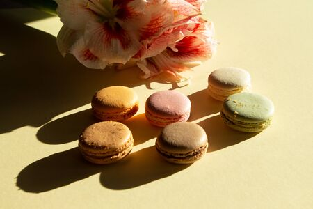 Contemporary composition pastel macarons and flower Amaryllis on light yelow backgraund with dark shadow. Greeting card.