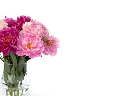 Bouquet of white and pink peonies in the vase isolated on white. Romantic mood. Greeting card. Banner with copy space. 版權商用圖片