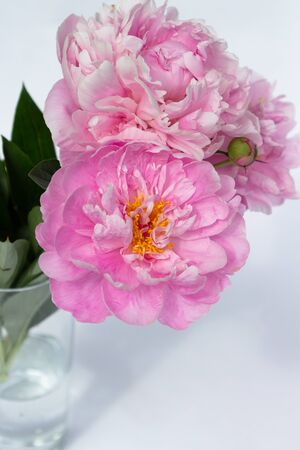 Bouquet of light pink peonies in the vase isolated on white. Romantic mood. 版權商用圖片