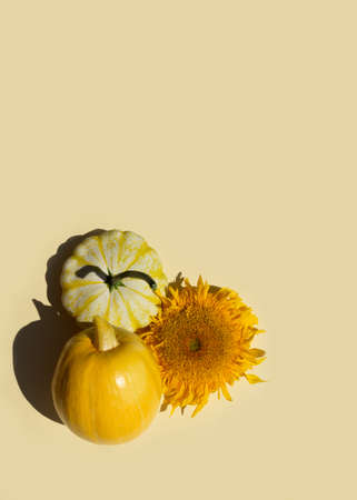 Set of pumpkin family vegetables on yellow background. Pumpkin, squash, zucchini. Copy space, top view, flat lay. Minimal autumn vegetable concept. Stock Photo