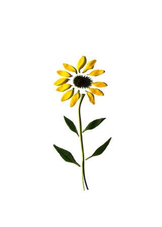 A daisy broken down into its parts 写真素材