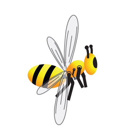 apis: Bee, honeybee, apis