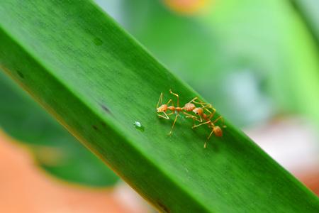 WEAVER: Ant Comunication Stock Photo