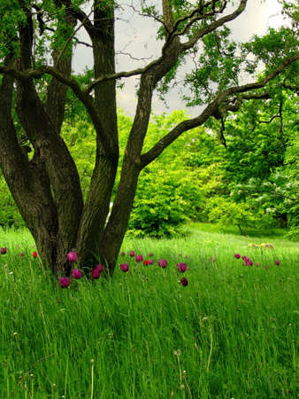 A superb looking meadow with bulb flowers in a park photo