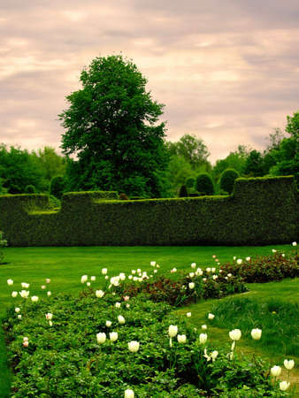 bundesgartenschau: garden chamber in a park with carefully pruned hedges and white tulips
