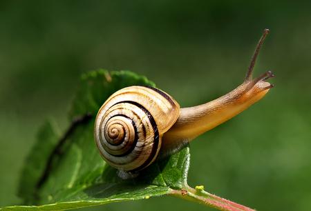snail Stok Fotoğraf