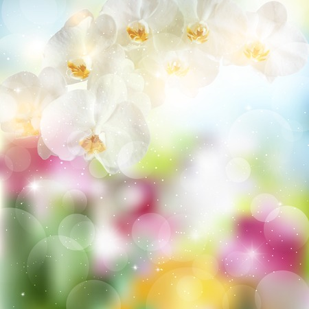 a sprig: summer background with sprig of white Orchid flowers.