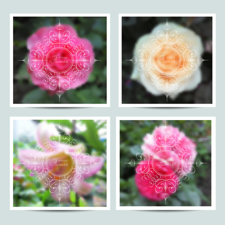 Vector image of vintage frames and colors, white rose.