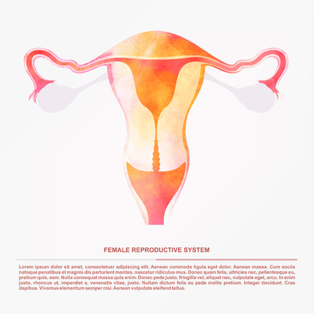sex girl: Illustration of womens sexual reproductive organ, the uterus. Illustration