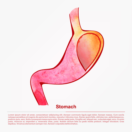 illustration of digestive organ.