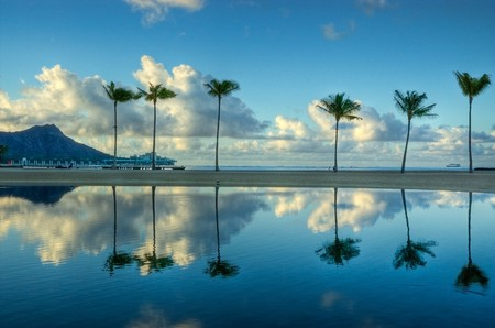 oahu: A sunrise reflection of six palms on Waikiki Beach, Oahu, Hawaii.