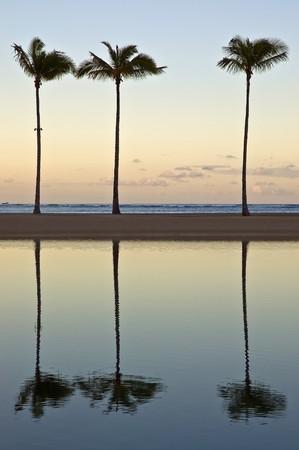 At sunrise three palm trees reflect off a lagoon on Waikiki beach, Honolulu, Hawaii Stock Photo