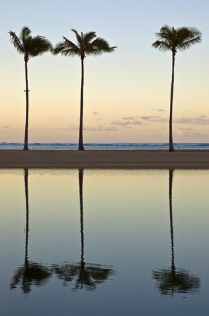 waikiki beach: At sunrise three palm trees reflect off a lagoon on Waikiki beach, Honolulu, Hawaii Stock Photo