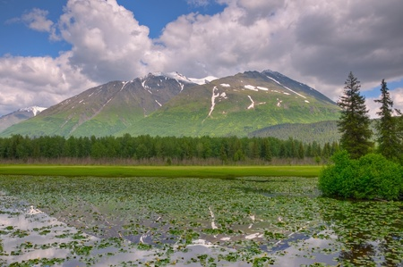A snow-capped mountain reflecting off a lush green lilly pad covered pond on the Kenai Peninsula, Alaska. Stock Photo