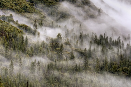 Mist rises from Yosemite valley through the surrounding forest in Yosemite National Park, California. photo