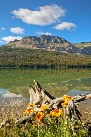 A reflection on Lower Two Medicine Lake with wildflowers in the foreground in Glacier National Park, Montana.