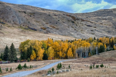 The West Boulder Road leads through the fall colors in McLeod, Montana Stock Photo