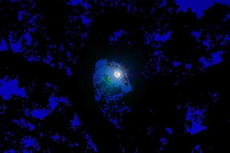 달은 분명 캘리포니아 밤에 오래 된 오크 나무에 실루엣을 캐스팅합니다.