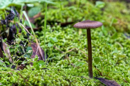 A wild mushroom among the green moss on a frosty California winter morning. Stock Photo - 17766884