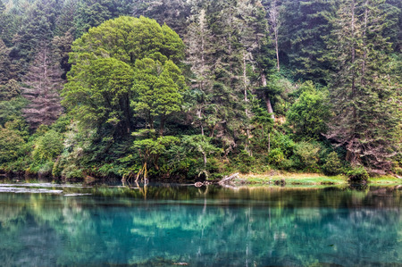 The beautiful green colors of the Albion River bank, Albion, California  Stock Photo