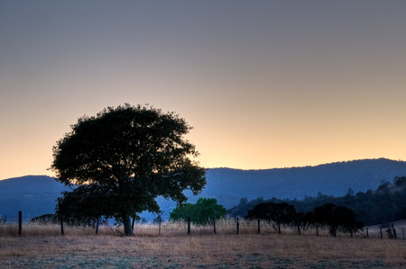 An oak tree and fence line at sunset on the Eastern foothills of the Northern California Coastal Range.