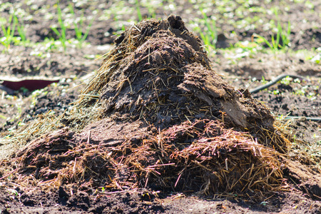 enrich: the heap of manure is good fertilizer and is used in agriculture Stock Photo