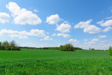 green vegetation: beautiful rural landscape with green vegetation and the bright sky Stock Photo