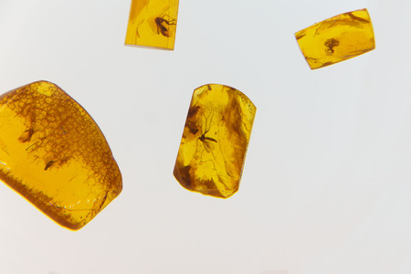 dead insect: amber slices with the ancient insects who stiffened in it