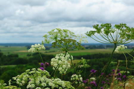 open spaces: view from the hill on open spaces through flowers