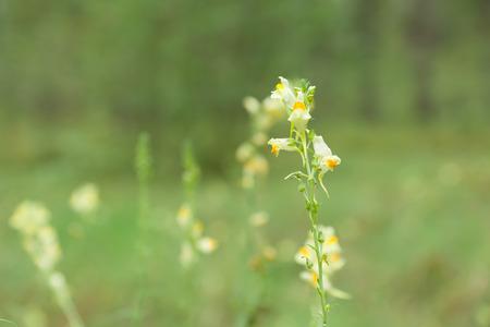 dense forest: cute little flowers bloom in dense forest