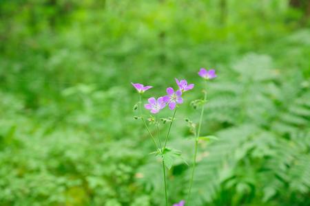 cute little flowers bloom in dense forest