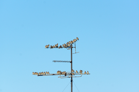 telephone poles: many small birds sitting on wires in the winter air