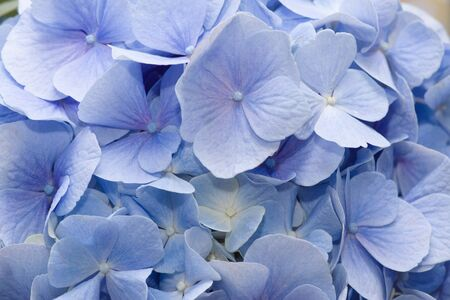 photo of a beautiful flower with delicate blue petals