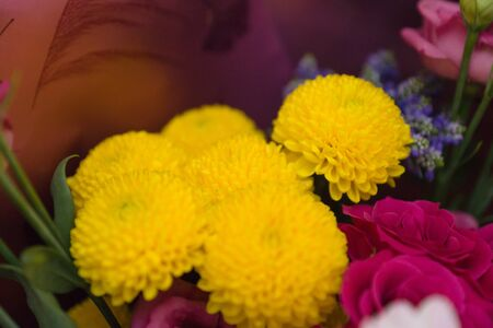 bouquet of beautiful fresh very bright garden flowers