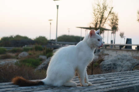 white cat sits on a city bench at sunset Stock Photo