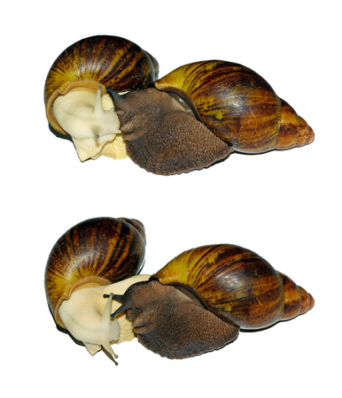 snails isolated on white.