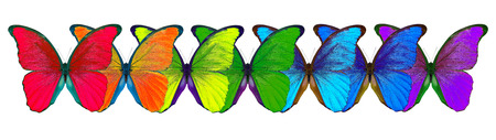 multicolored morpho butterfly isolated on white background Stock Photo