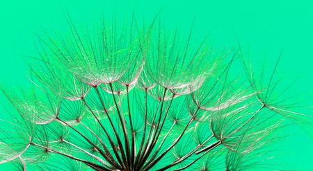Abstract dandelion seeds. Extreme macro. Soft focus.