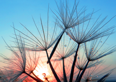 Abstract dandelion seeds on a background of pink and blue sky. Extreme macro. Soft focus.