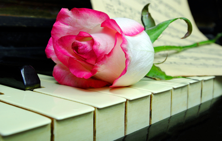 rose on the old piano Stock Photo
