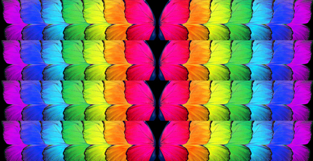Gay flag. Colors of rainbow. Pattern of multicolored butterflies morpho, texture background. Stock Photo - 98403874