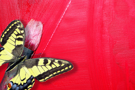 painting concept. brush artist and red brushs strokes on canvas. beautiful butterfly on a red background. copy spaces. Stock Photo