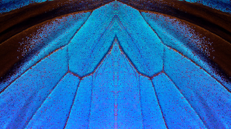 Blue abstract pattern. Wings of the butterfly Ulysses. Closeup. Wings of a butterfly texture background.