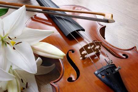 violin and lily on a wooden background. close up